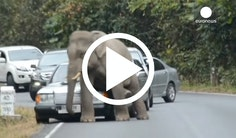Elefant smadrer bil