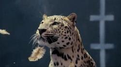 Jaguar laver fis med Mercedes