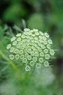 10 skønne planter